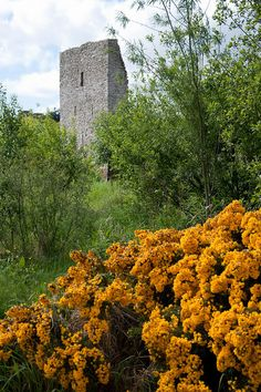 Remnants of the castle at Trim.