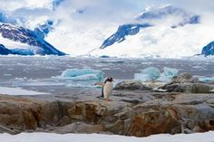 Antarctica with an 8-Year-Old | Travel Babbo