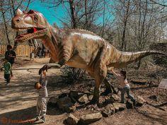 Dinosaurierpark Teufelsschlucht.1,5 Km. Rundgang - 620 Millionen Jahre Camel, Animals, Outdoor, Outdoors, Animales, Animaux, Camels, Animal, Outdoor Games