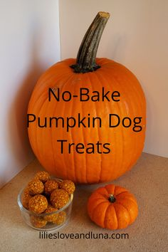 Easy 3 ingredient treats for your dog. No Bake Dog Treats, Peanut Butter Dog Treats, Baked Pumpkin, Pumpkin Spice, Pumpkin Dog Treats, Dog Treat Recipes, 3 Ingredients, Your Dog, Thanksgiving