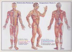 mapa para acupuntura - Pesquisa Google