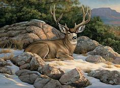 Oil painting of mule deer by wildlife artist Crista Forest. Description from pinterest.com. I searched for this on bing.com/images