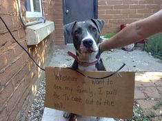 lucy-dog-shaming-pic-- what a smart dog