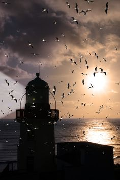 Lighthouse flock #Photography 30 Days FREE $4.95 per month after 30 days