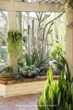 This pergola surounded by succulents is a great little oasis for succulent lovers
