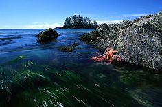 Long Beach, Tofino, Pacific Rim, Vancouver Island, BC.
