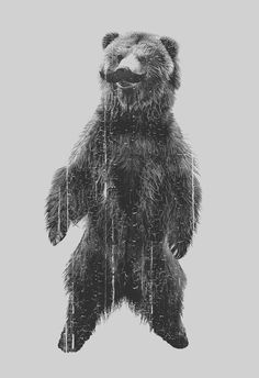 Grizzly Bear with Mustache Men's American by CrawlspaceStudios