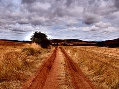 Pista entre Sigüenza y Palazuelos, situada entre el Alto del Monte y la CM-110