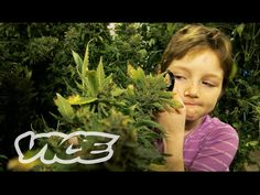 Marijuana Minors - ✅WATCH VIDEO👉 http://alternativecancer.solutions/marijuana-minors/   	  See the first episode of SMOKEABLES: How to make a gravity Bong – For more Weediquette episodes, click here: Medical marijuana is legal in 20 states and the District of Columbia, but there are still cases of use that are very controversial, such as medical marijuana for children. Some...