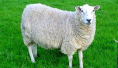 This is why I started this board   A male Fresno State University student was reportedly caught having sex with a sheep, and was promptly arrested. While bestiality – that is, having sex with