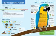 BirdTricks Parrot Infographic by Greer Genius, via Behance