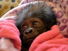 Is dit niet het schattigste diertje ooit? (© Masatsugu Ohashi/Rex Features)