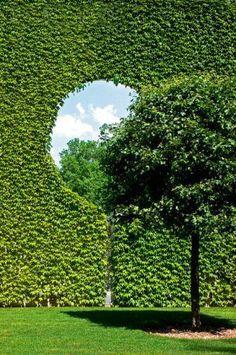 sculptured hedge