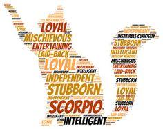 SCORPIO OCTOBER 23– NOVEMBER 21 #pet #zodiac #scorpio