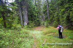 Walks with Moss: July 2014