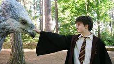 Harry (Daniel Radcliffe) meets Hippogriff Buckbeak in Harry Potter and the Prisoner of Azkaban Harry James Potter, Studio Harry Potter, Magia Harry Potter, Harry Potter Aesthetic, Harry Potter Characters, Harry Potter World, Hogwarts, Daniel Radcliffe, Voldemort