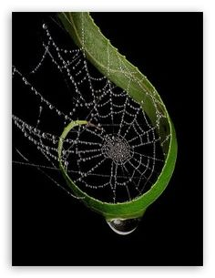 Raindrops On Spider Web HD desktop wallpaper