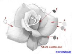 How to Draw a Rose in Pencil - Been working on this tutorial tonight but not finished yet. So much harder in pencil than oil paints.