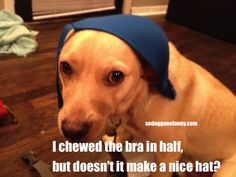 So Dog Gone Funny!: New hat
