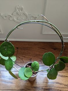 Do you have plants that need a trellis? You can make 4 circle trellises for just ~ 25 cents each, versus paying over $10 for one. Heres a quick, easy & inexpensive tutorial on how to make a circle trellis (for my Hoya plant). Hoya Plants, Trellis, Fun Crafts, Craft Projects, Gardening, Wreaths, Floral, Easy, Indoor House Plants
