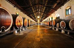 Colares Regional Cellars, of the famous Colares wine. Sintra, Portugal
