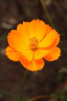 경부3녹지 도시텃밭의 가을꽃