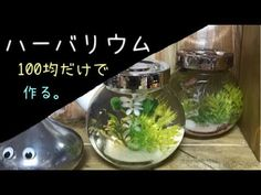 ハーバリウムを100均グッズだけで超簡単に作る。 - YouTube Herbalism, Diy And Crafts, Youtube, Home Decor, Resin, Herbal Medicine, Interior Design, Home Interior Design, Youtubers