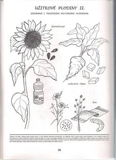 užitkové plodiny Autumn Activities For Kids, Experiment, Elementary Science, Nature Crafts, Science And Nature, Kids Learning, Coloring Pages, Kindergarten, Projects To Try