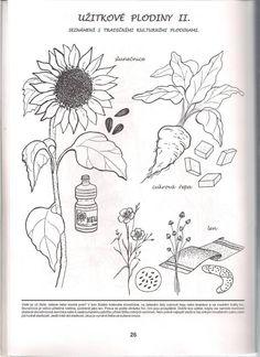užitkové plodiny