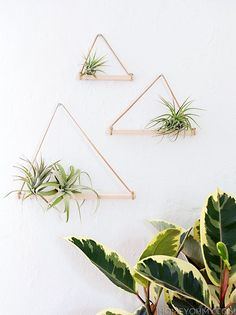 Air Plant Hangers DIY. But why couldn't you use reclaimed wood n make different sized triangles to hang on the wall for artwork, canvases, ceramics, plates, anything?