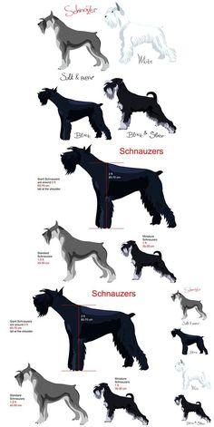 Set of Dog schnauzer breed: Giant Schnauzer; Set of schnauzer colors: white, black, salt and pepper, black silver, Schnauzer Grooming, Mini Schnauzer Puppies, Giant Schnauzer, Schnauzers, Cute Dogs And Puppies, Big Dogs, Photo Animaliere, Mundo Animal, Dog Breeds