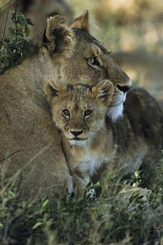 #Lioness And #Cub - just gorgeous