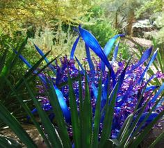 Example of Chihuly's garden art - smaller scale compared to many of his pieces. But this is wonderful!