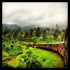 this green scene during train travel in Sri Lanka