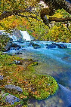 Waterfall in the Forest, Patagonia, Argentina