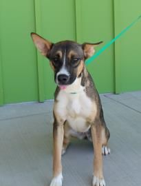 April has been adopted!