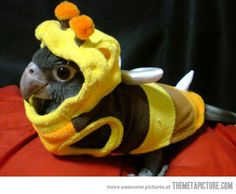 Parrot costumes! How cute is this???