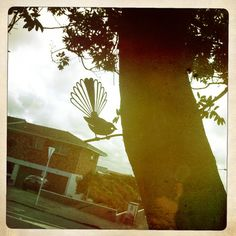 Metalbird Piwakawaka (Fantail) - metalbird