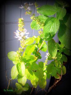 I love my plants...