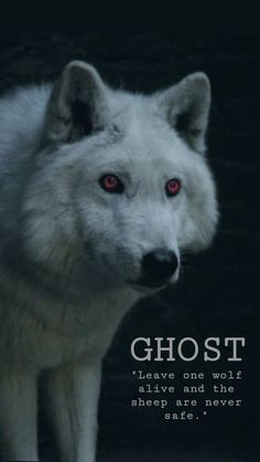 Game Of Thrones Ghost, Game Of Thrones Wolves, Drogon Game Of Thrones, Arte Game Of Thrones, Game Of Thrones Tattoo, Game Of Thrones Poster, Game Of Thrones Facts, Game Of Thrones Dragons, Game Of Thrones Quotes