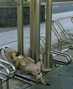 (KO) Doggie Heaven, a good nap in the open air!