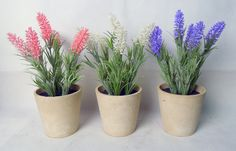 Lavender in paper mache pot with different colors