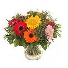 Een Boeket Gerbera's zal uw kamer opfleuren en lekker doen ruiken. Maak iemand blij met een bloemetje.