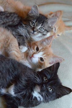 kitties kitties everywhere more kitties!!