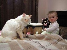 #cat #cats #kittens #legendasibiri #кот #котэ #котик #котики #котята #кошки #питомник #сибирскиекошки  #невскаямаскарадная #легендасибири #сибирскиекошки Верный Лисик Легенда Сибири с лучшим другом! (Faithful Lisik Legenda Sibiri with his best friend!  d 21 33)