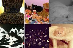 mailonline reader camouflage cats