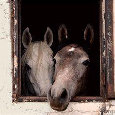 Fotografía de caballos vista en Flickr. Autor: Osvaldo Zoom
