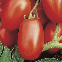 Viva Italia Hybrid Tomato- An Italian sauce tomato with exceptionally high yields of firm but juicy fruits that are not only fine for peeling and canning, but delicious for fresh eating. The blocky, pear-shaped fruits are high in natural sugars which is rare in this type of tomato. The determinate plant habit is refined and compact, with good fruit set even under adverse conditions. Outstanding disease resistance.
