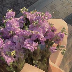 Dark Flowers, Pastel Flowers, Simple Flowers, Vintage Flowers, Yellow Flowers, Beautiful Flowers, Spring Flowers, Plant Aesthetic, Flower Aesthetic