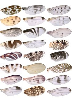Cocoon and Butterfly Cartoons. Butterfly and Bird Catoons. Butterfly and Caterpillar illustration. Butterfly and Caterpillar artworks. Butterfly, bird and Caterpillar Illustrations. Insect Wings, Insect Art, Patterns In Nature, Textures Patterns, Fruit Flies, Bugs And Insects, Art Plastique, Lady Bug, Artsy